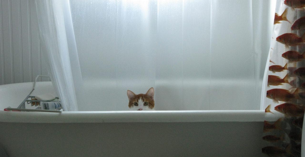 Katzenwäsche ist das Zauberwort in den kältesten zwei Wochen des russischen Sommers. / flick/David DeHetre