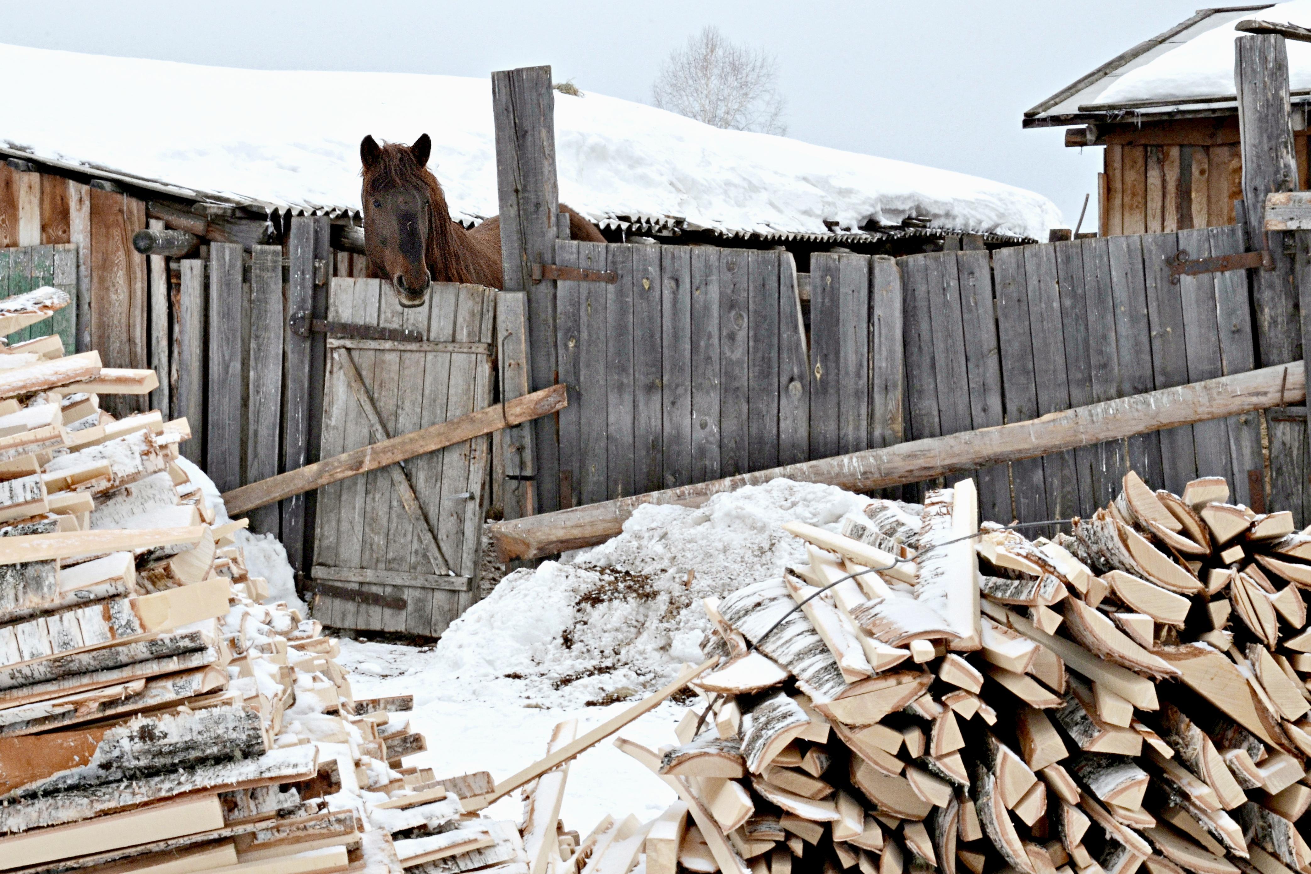 Zu Staschkunas' Hof gehören auch zwei Pferde, Kühe und Hühner. / Peggy Lohse